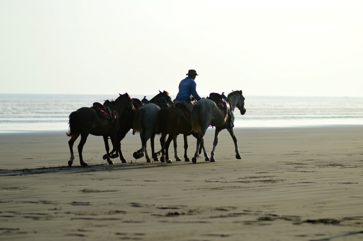 costa rica/ currently wearing/swiss fashion blog/ horses on the beach