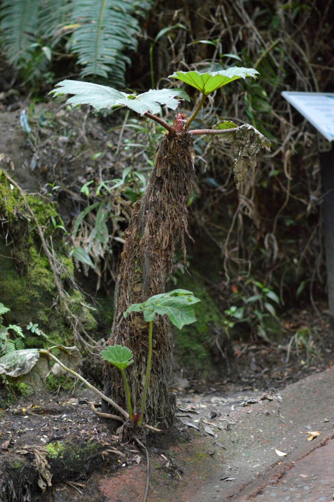 Poas Volcano / Costa Rica / Currently Wearing / Fashion Blog