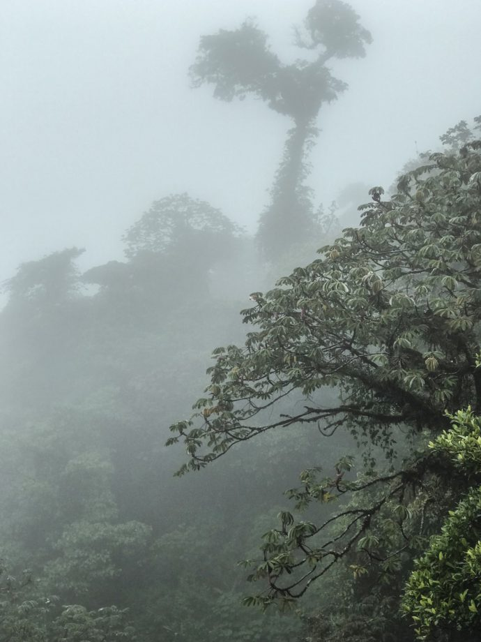 Monteverde_Selvatura Park/Treetop walkways suspension bridges/currently wearing swiss blog 2