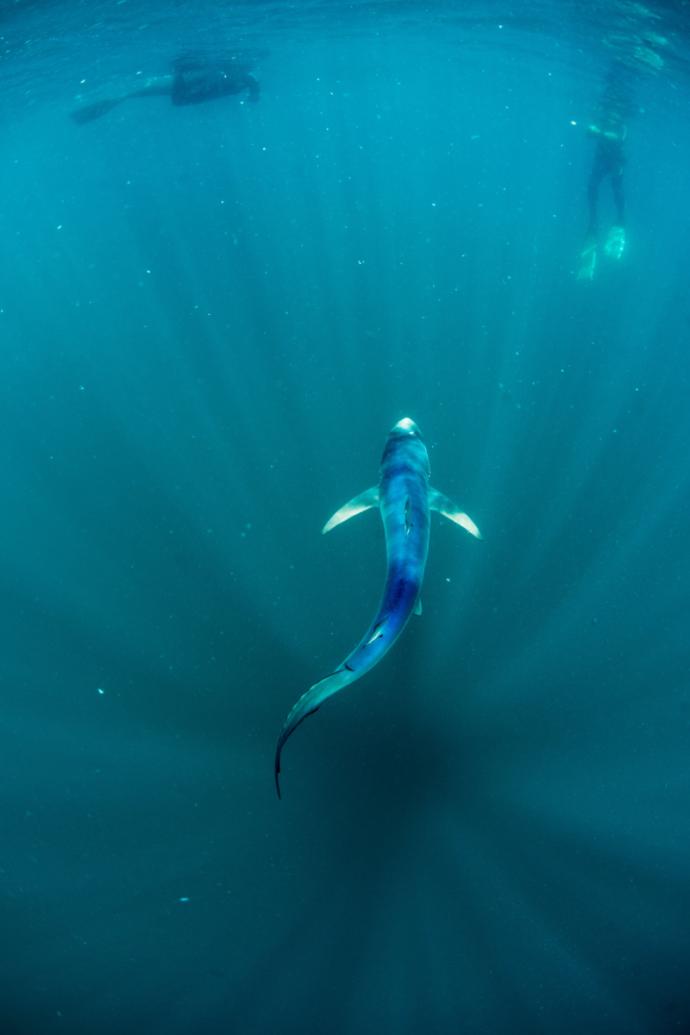 seaspiracy-netflix-documentary-sustainable living-swiss blog